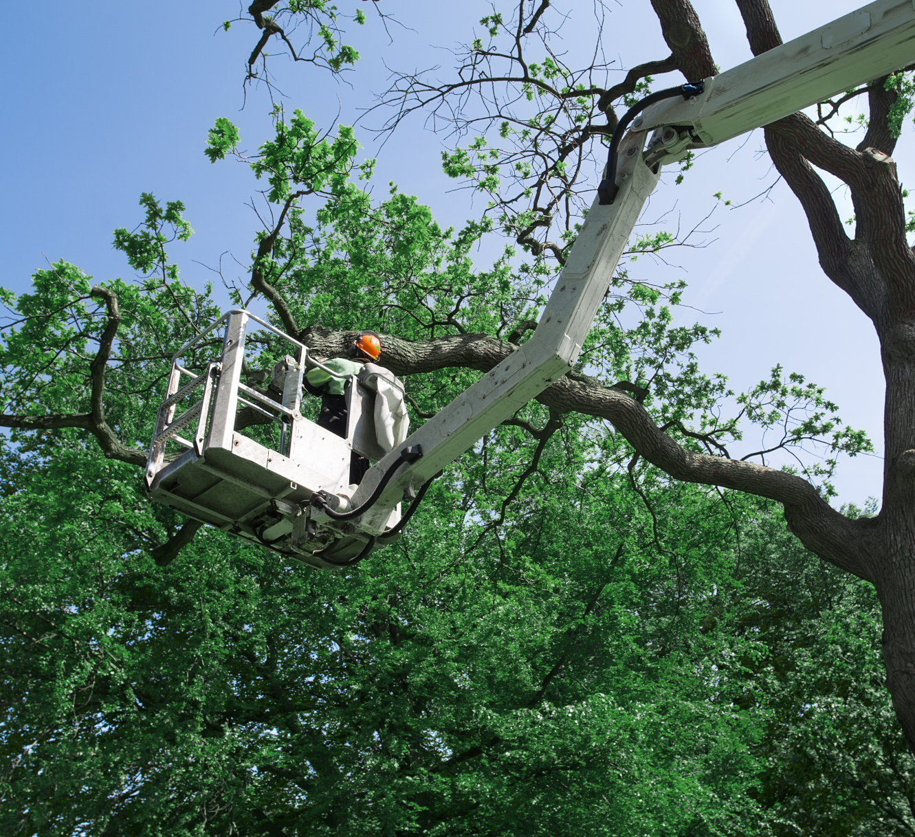 Professional Tree Service Business based in Cottage Grove, Oregon serving Springfield, Eugene, Creswell, Veneta and beyond!