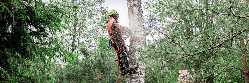 Tree Service - Cottage Grove, Springfield, Eugene, Creswell, Veneta and beyond!